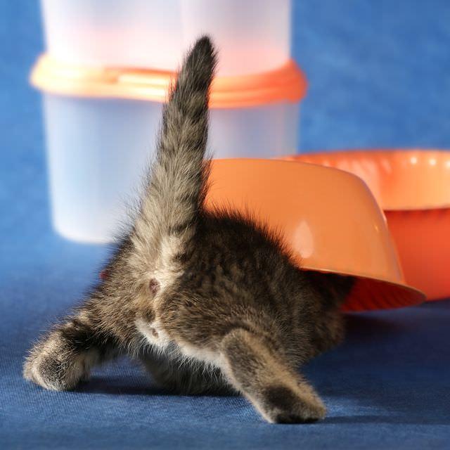 О том, как поставить клизму кошке в домашних условиях, смотрите в этом 78