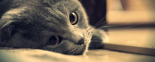 Грустный взгляд кота