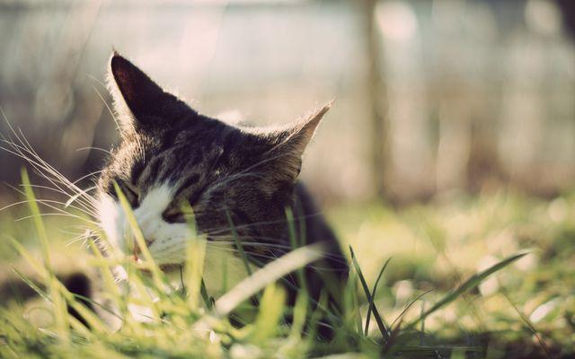 Кот ест траву на улице