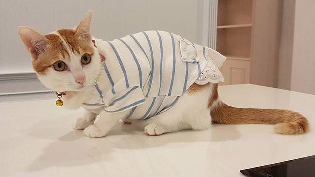 кошка в поликлинике