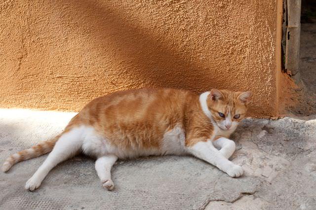 Рыжий кот у стены