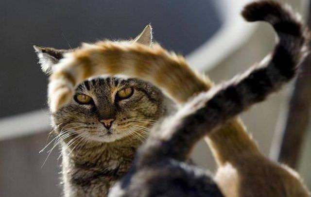 Кот смотрит на хвосты