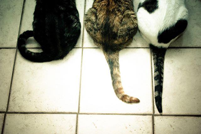 Разные кошки и хвосты