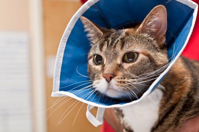 Специальный воротник для кошки