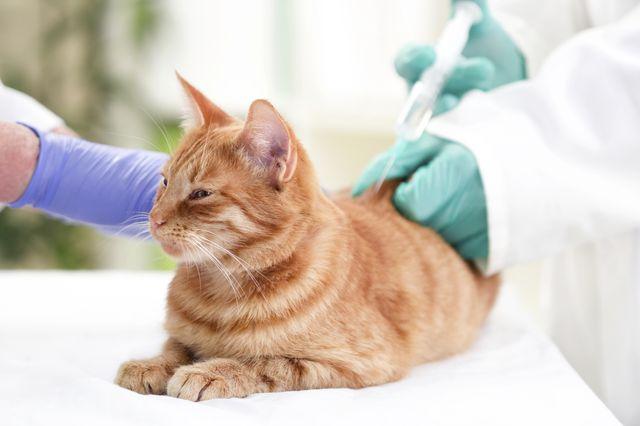 Врач делает инъекцию кошке