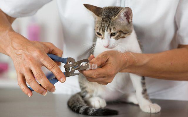 Подстрижка ногтей в клинике