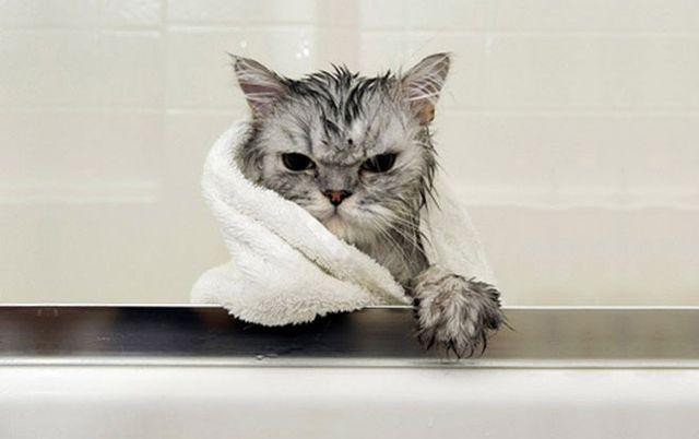 Мокрый кот в полотенце