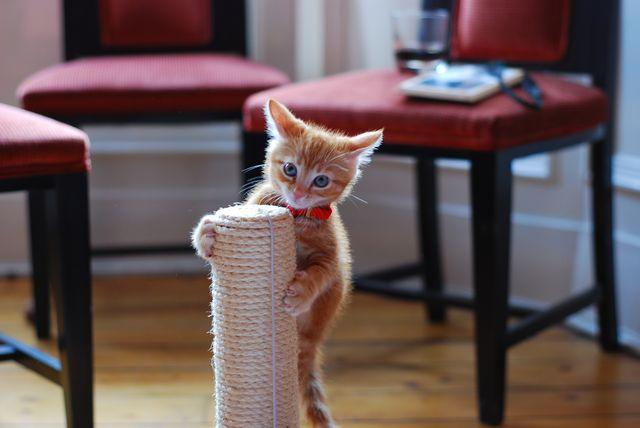 Котенок залез на коггеточку