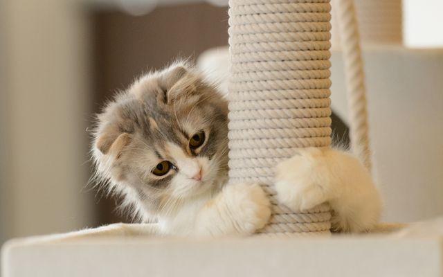 Кот лежит на когтеточке