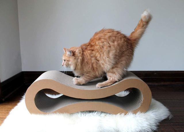Толстый кот точит когти