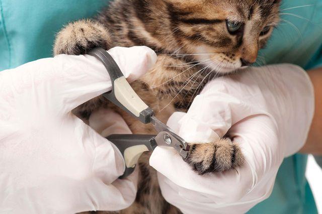 Котенку срезают котгти