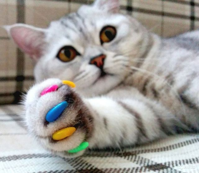Силиконовые накладки для кошек