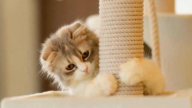 Котенок обнимает котгтеточку