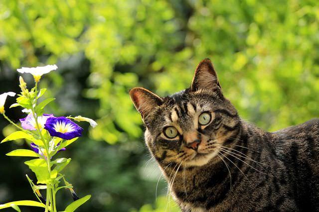 Кот среди травы
