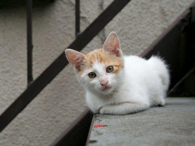 Кот сидит на ступени