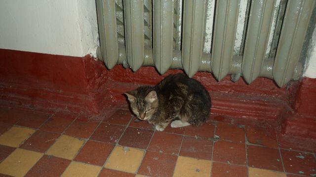 Кошка греется под батареей