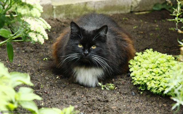 Кот лежит на земле