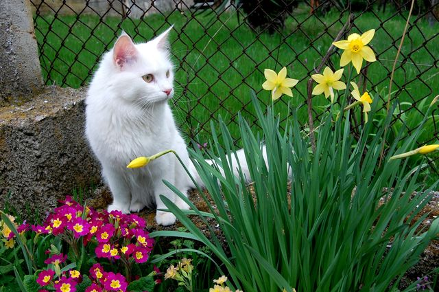 Кошка среди цветов