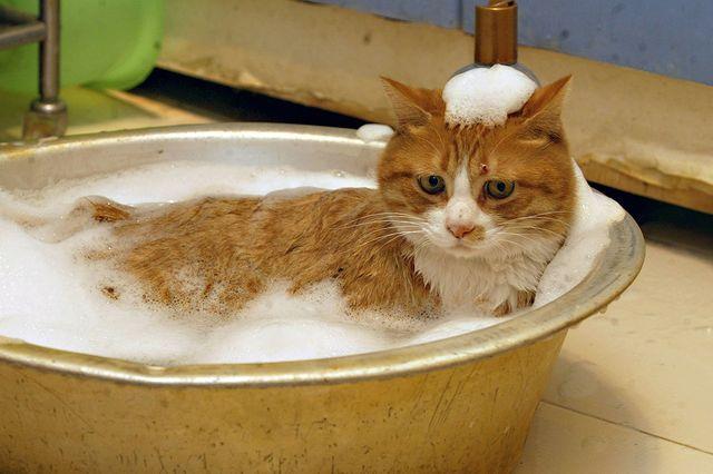 Кошка принимает ванну