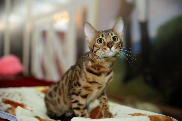 Кошка сидит на подстилке