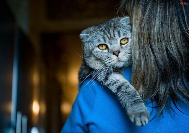 Кот на руках у хозяйки