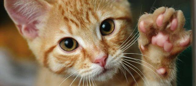 Котенок трогает лапой