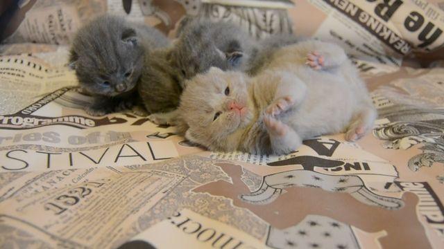 12-ти дневные котята