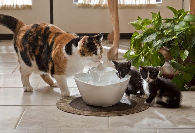 Кошка с котятами у миски с водой