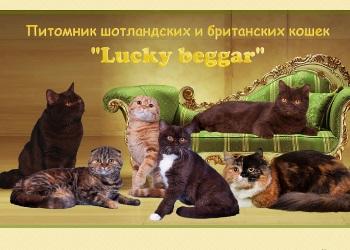 Скрин сайта питомника Lucky beggar