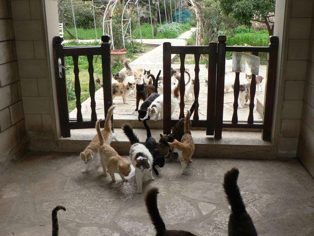 Кошки заходят в калитку