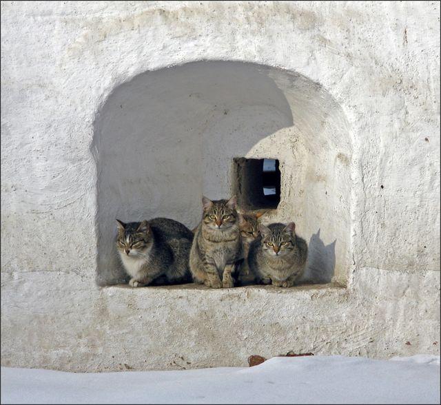 Кошки сидят в монастырской стене