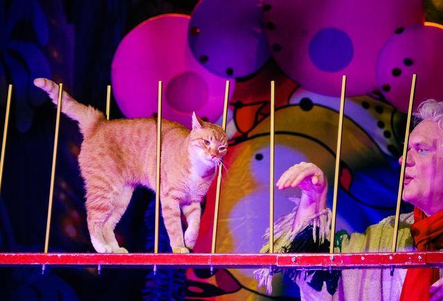 Кошка на сцене