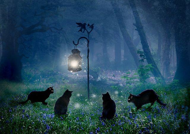 Встреча кошек под фонарем