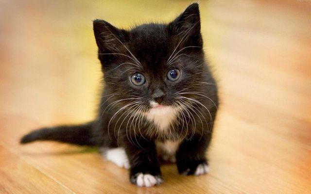 Котенок на полу