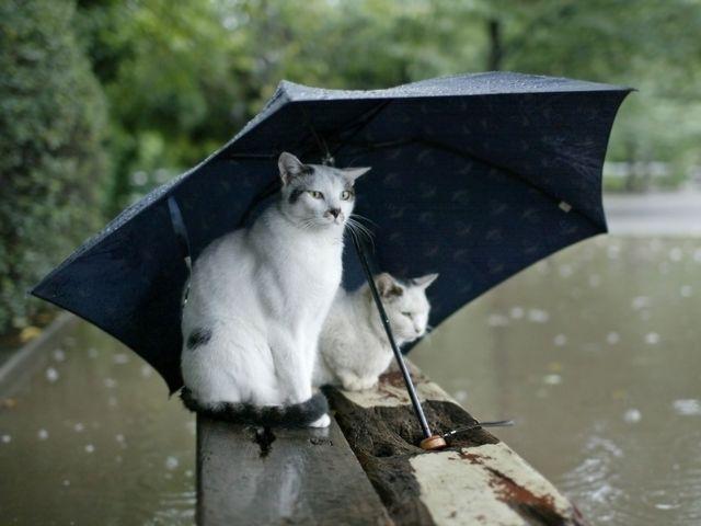 Коты под зонтом