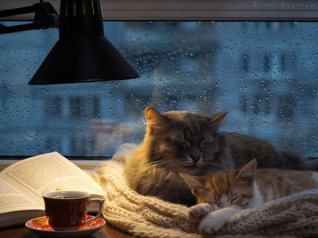 Кошка с котенком у окошка