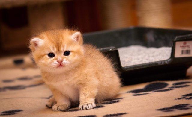 Котенок у лотка