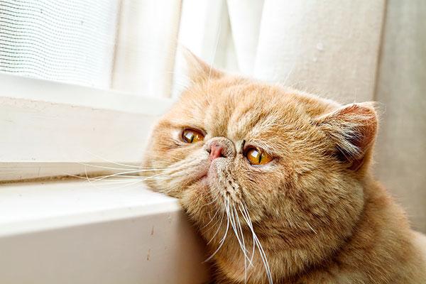 кот скучает у окна