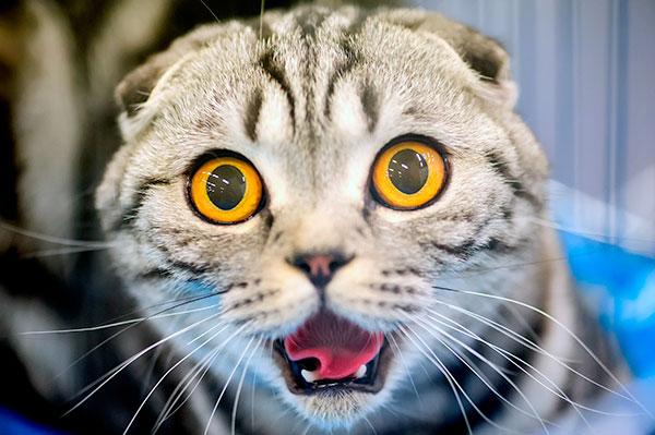 Не получилось сделать прививку коту - дегельметизировать снова?